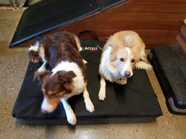 Dogs on a Mat